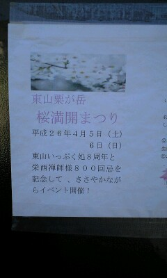 粟ヶ岳 桜